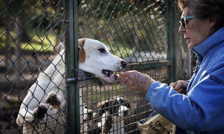 Associazione amici animali di Viterbo