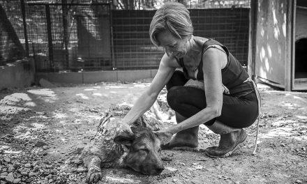 Raccolta mangime per cani, tutti diamo una mano