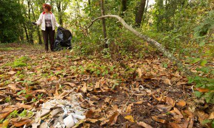Salvaguardia boschi, meglio parco che sporco