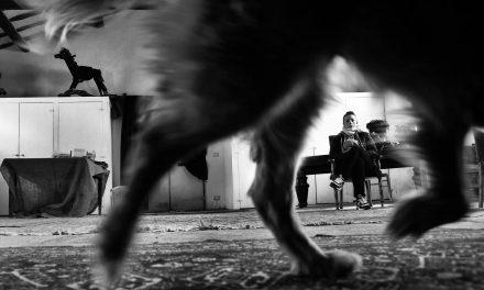 Laboratorio teatrale cinofilo, un cane per amico