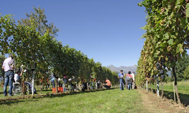 Agricoltura, un sorriso per tutti