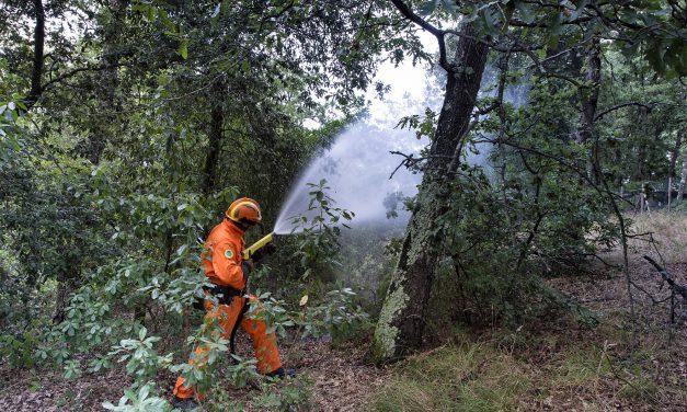 Natura, i paladini del bosco