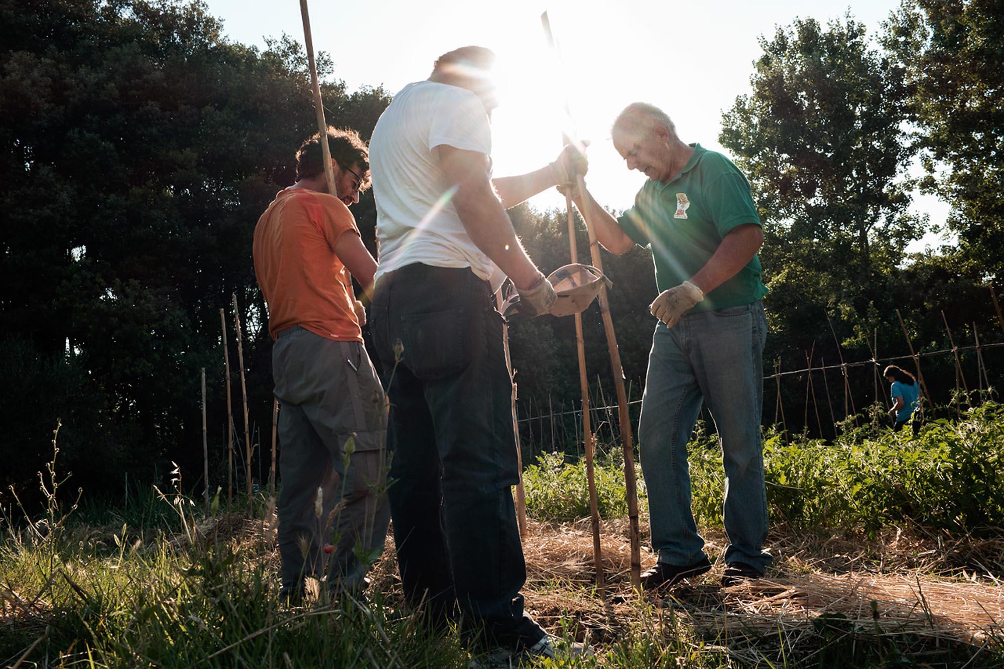 0037 volontari campi coltivati - Storie di volontariato toscano