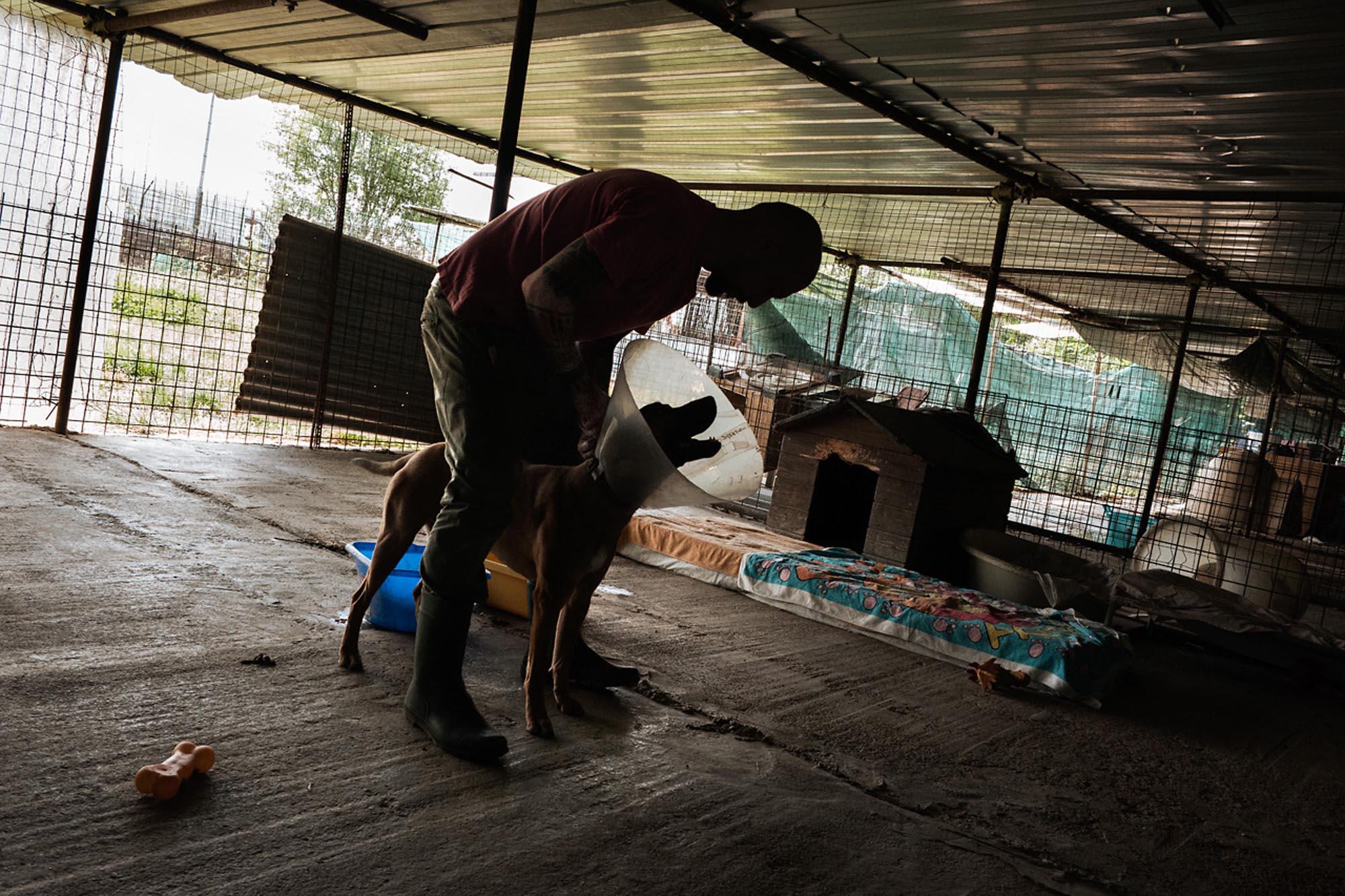 0037 volontariato animali toscana - Storie di volontariato toscano