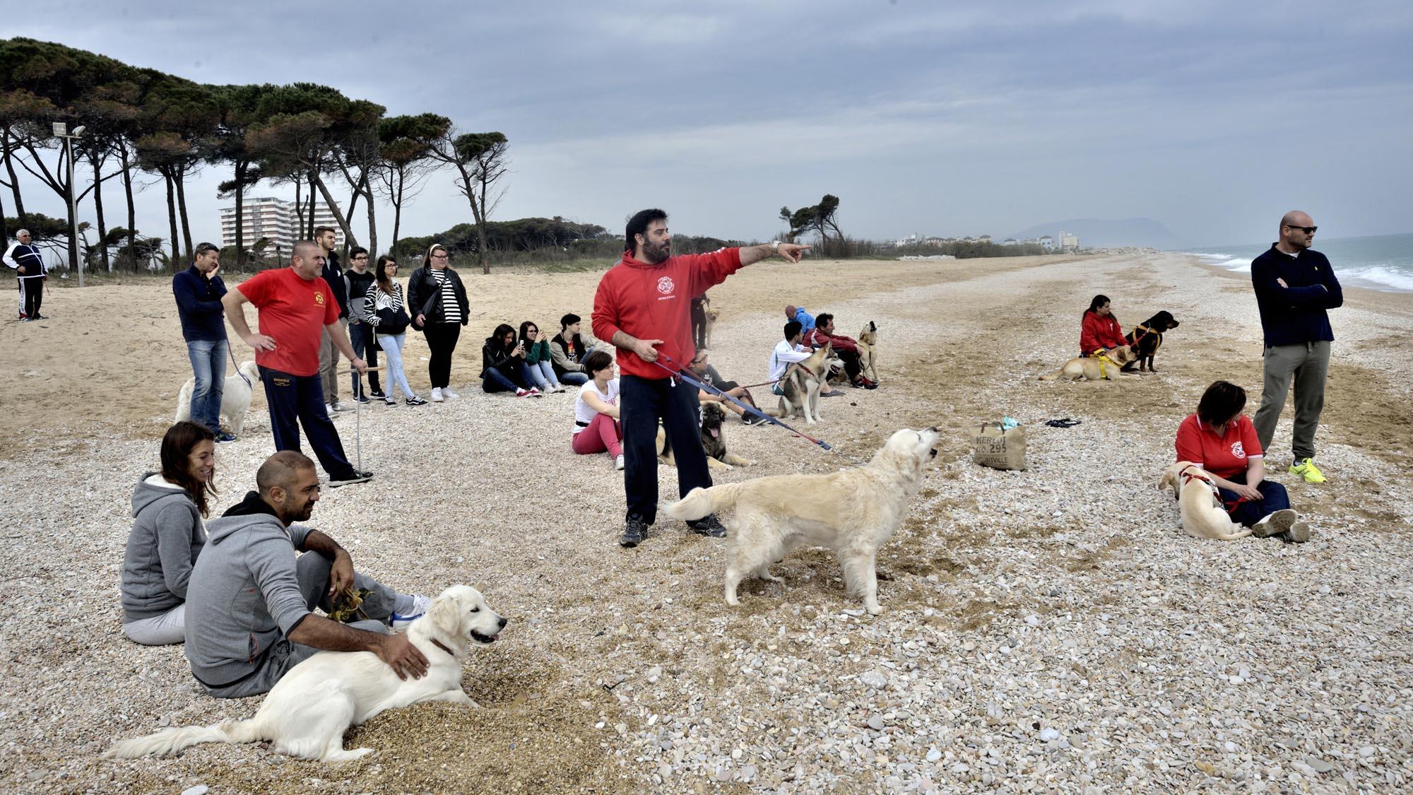 0106 addestramento cani soccorso cinofilo 1 - Soccorso cinofilo Pegasus