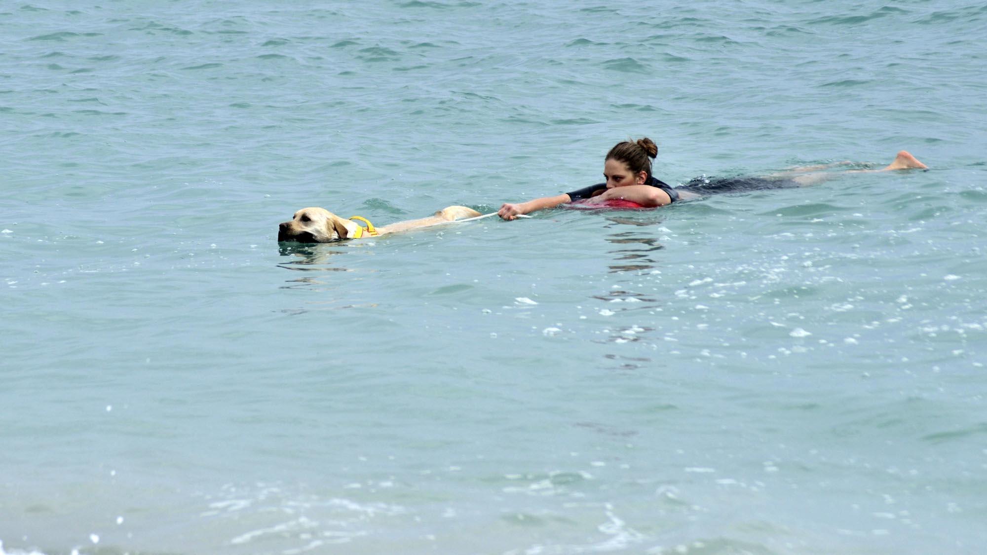 0106 addestramento cani soccorso cinofilo 2 - Soccorso cinofilo Pegasus