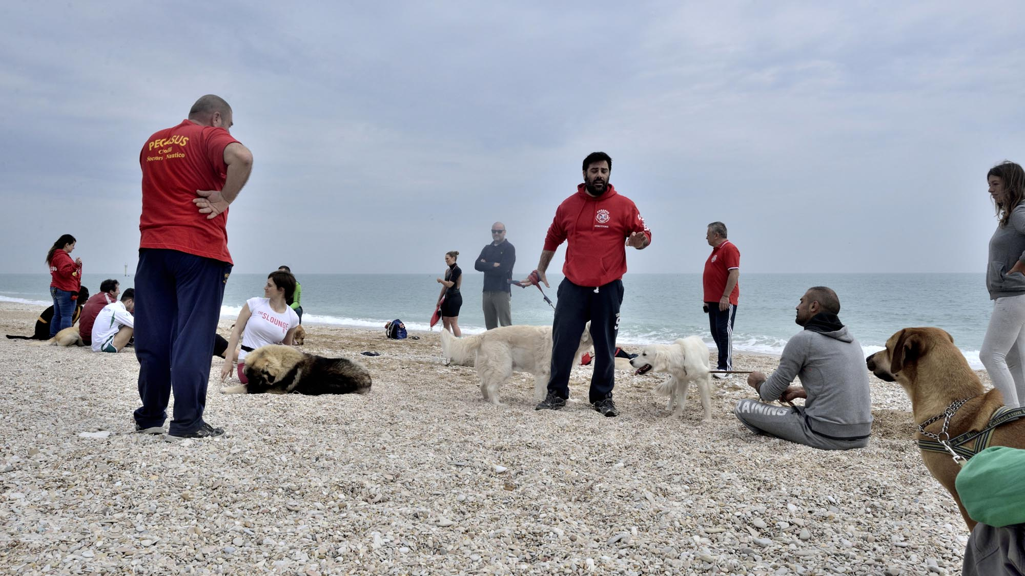 0106 addestramento cani soccorso cinofilo - Soccorso cinofilo Pegasus