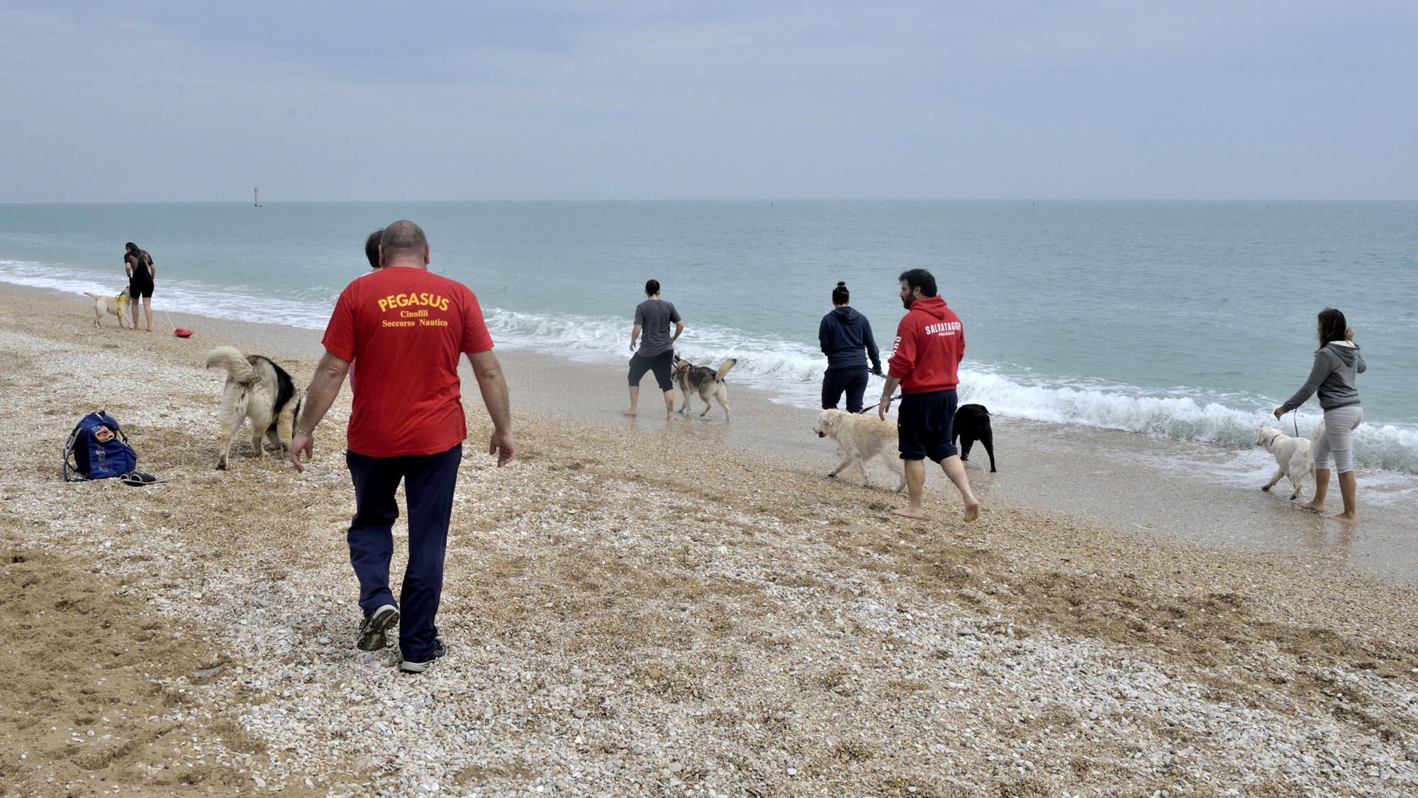 0106 soccorso cinofilo addestramento cani - Soccorso cinofilo Pegasus