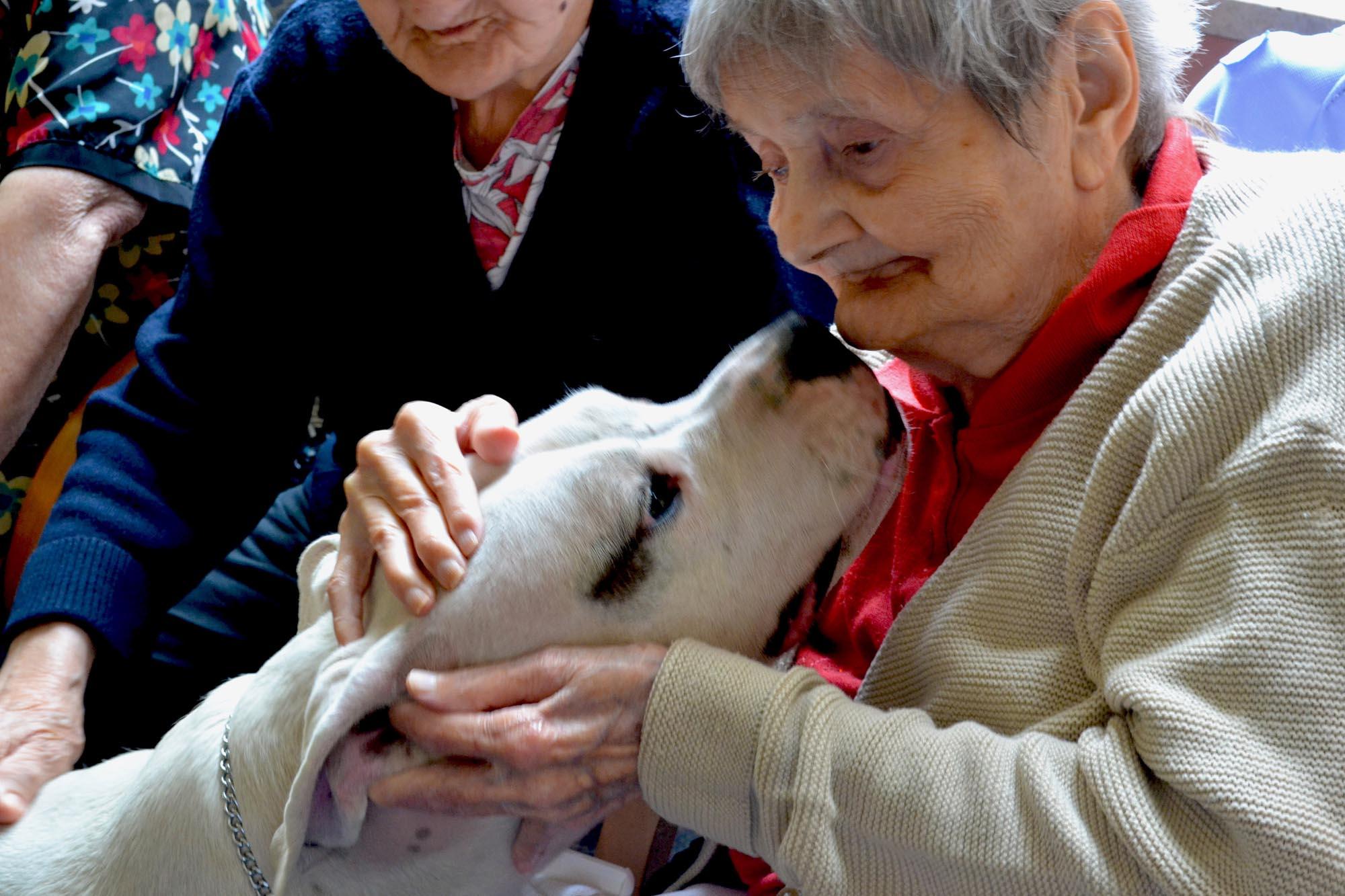 0133 Pet therapy con persone anziane - Pet Therapy con anziani