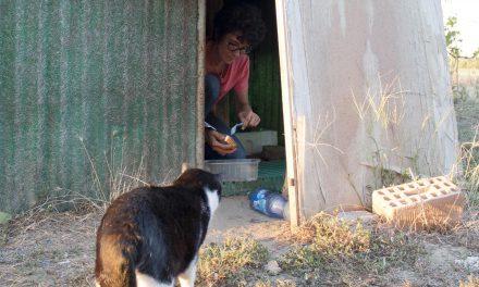 Volontari OIPA, la via dei gatti