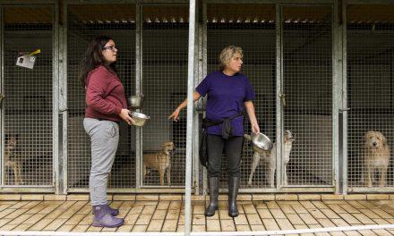 tutela animali, l'arca delle code