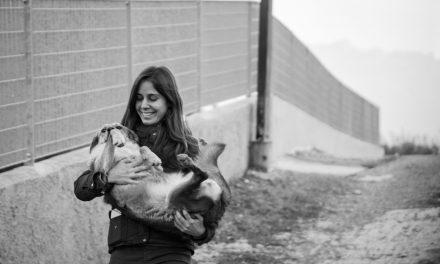 Protezione animali, i migliori amici
