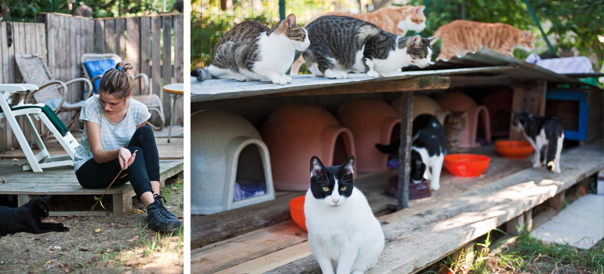 0194 Volontari per gatti randagi - Gattile, legami felini