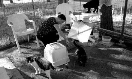 Ricovero per gatti abbandonati