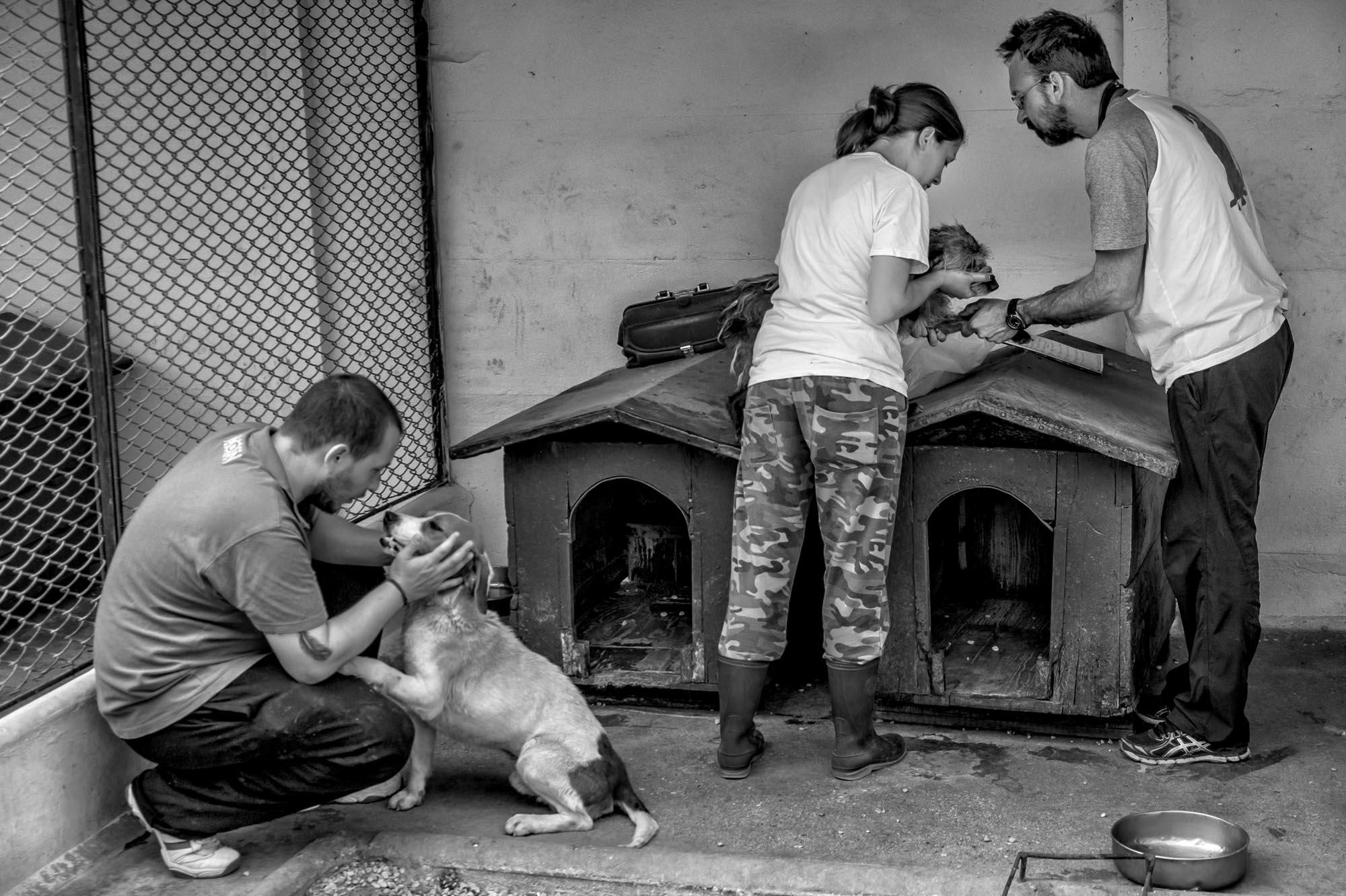 0441 Volontari canile 1 - Canile di Rubano Padova
