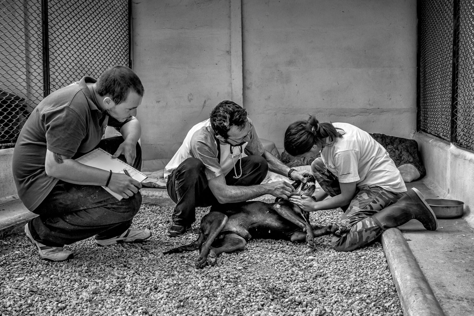 0441 Volontari canile 2 - Canile di Rubano Padova