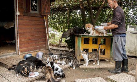 Protezione animali, la voce degli animali