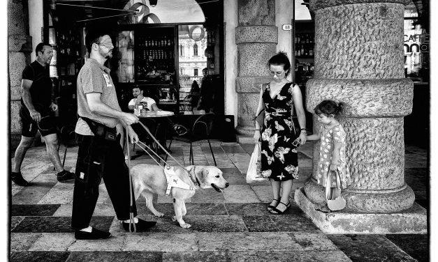 Addestramento cani guida, puppy walkers