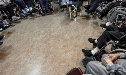 Pet therapy, cavalcando le disabilità