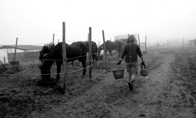 Protezione animali, HIP routine quotidiana