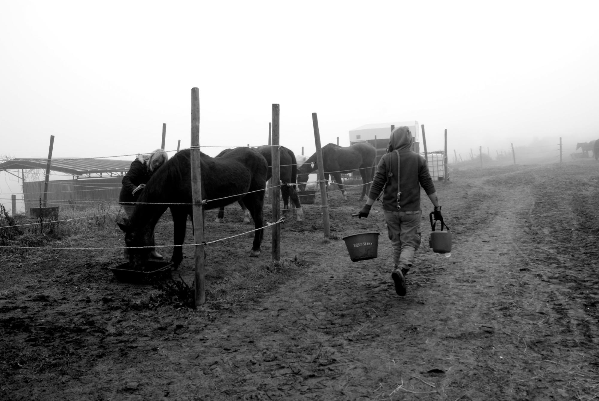 0723 Volontari per gli animali 2 - Protezione animali, HIP routine quotidiana