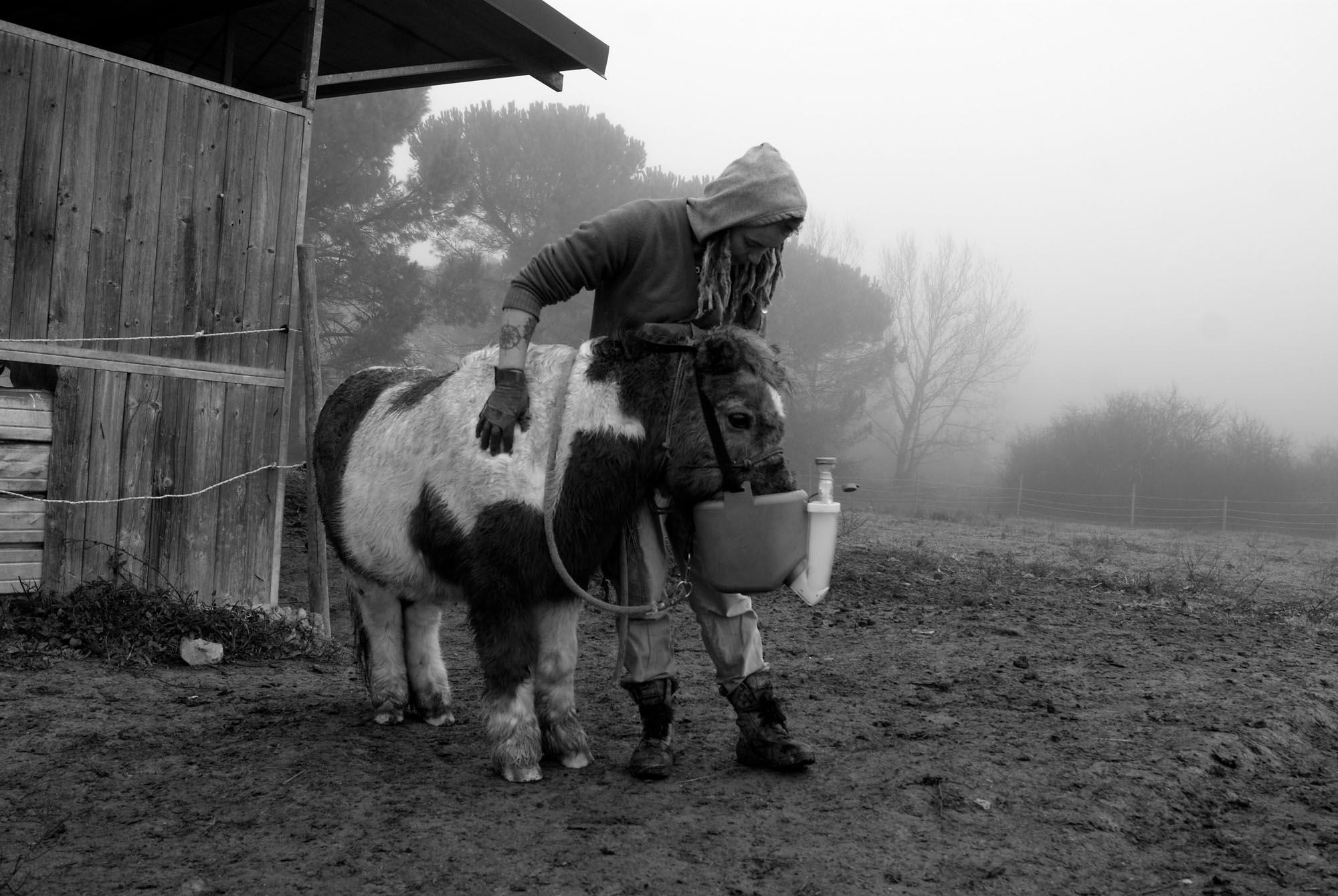 0723 Volontari per gli animali 3 - Protezione animali, HIP routine quotidiana